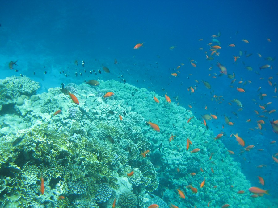 A VOYAGE ON THE RED SEA!