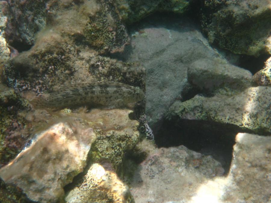 нового рыбы адриатического моря фото с названиями имеют отличные вкус