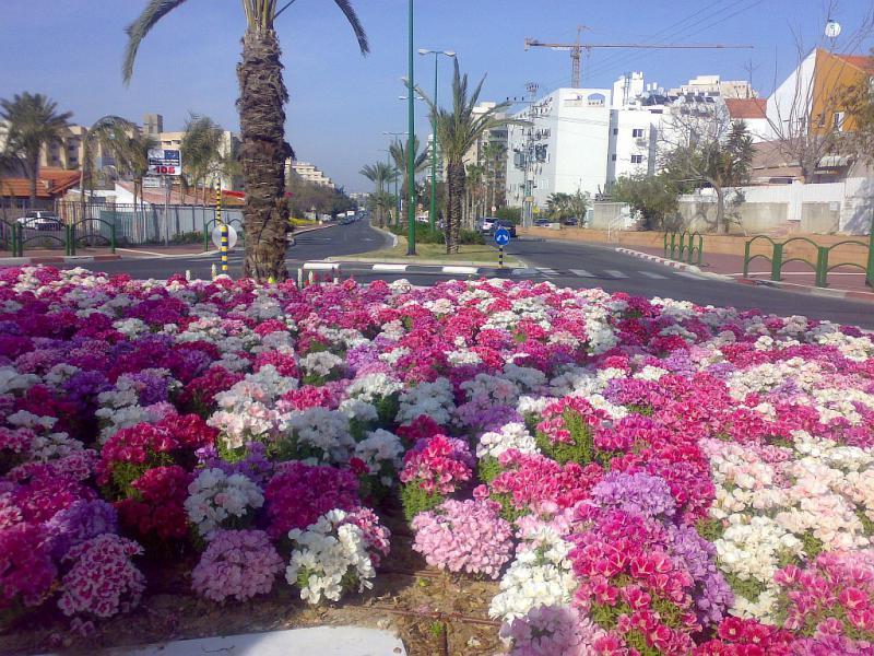 рассказал израиль картинки цветов художника картины