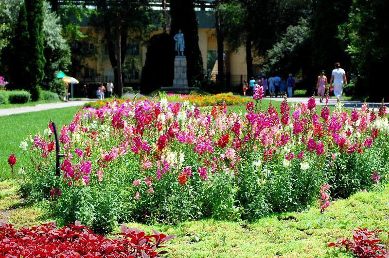 Цветы доставка алма-ата