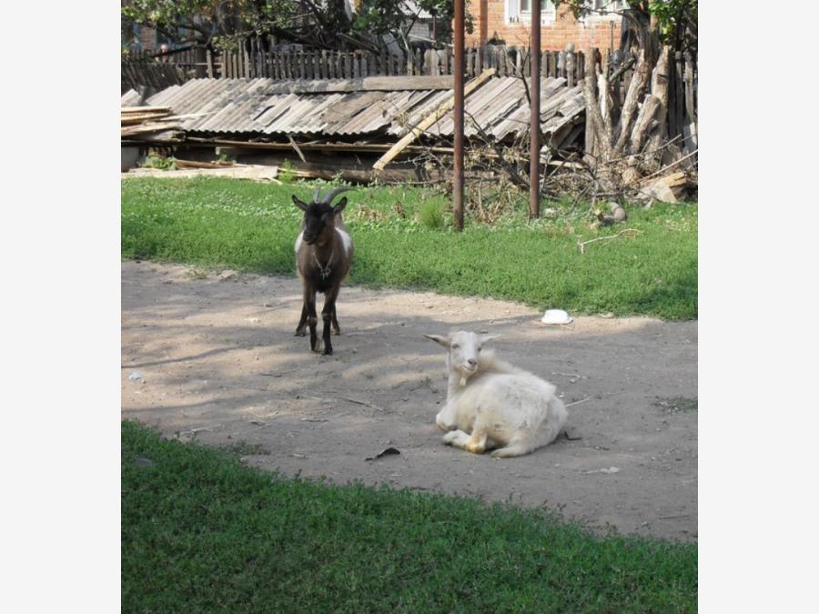 знакомства кошки самарская область