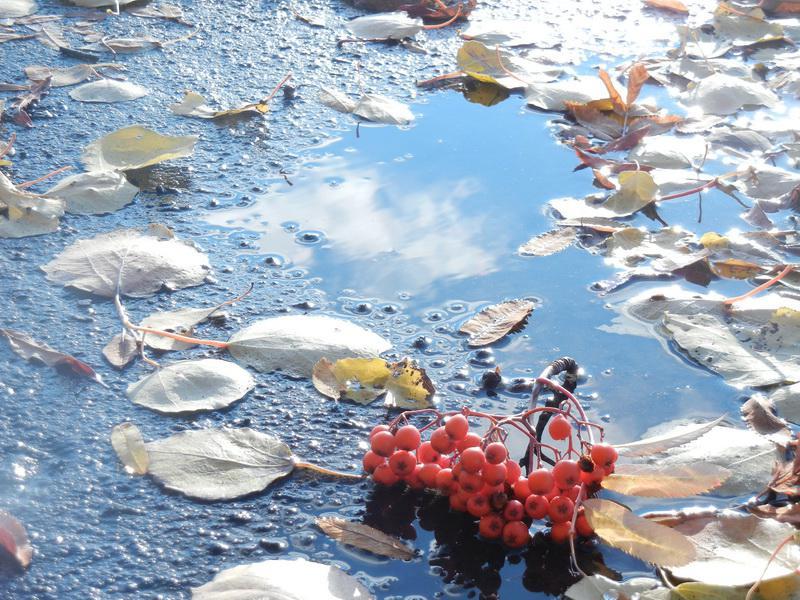 североморск осень в картинках примеру, цвета шампанского