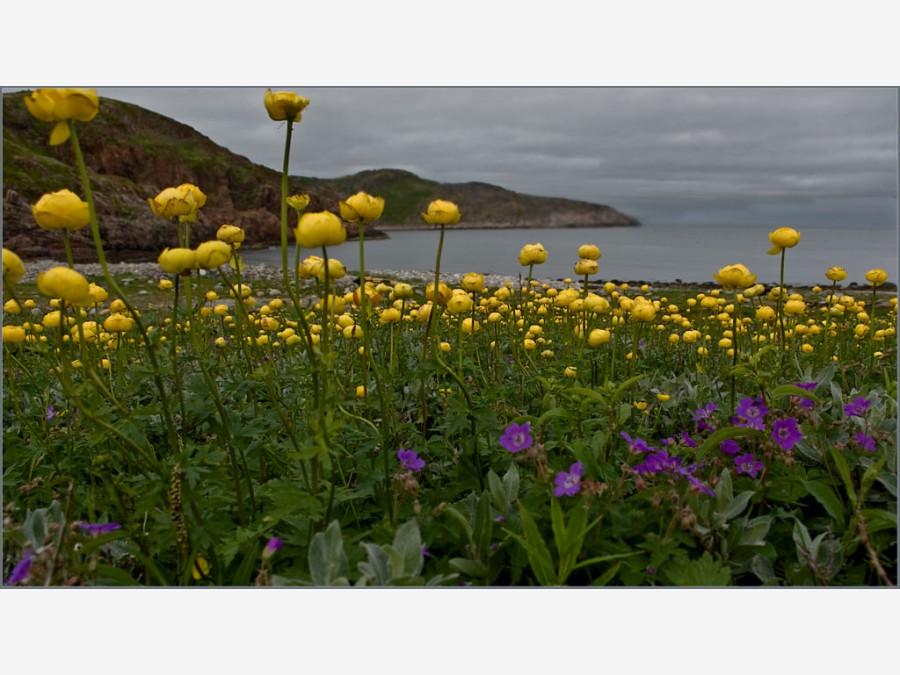 Фото северных цветов